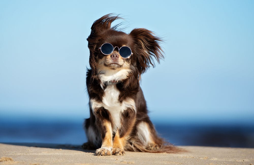 Most Expensive Dog Breeds In The World © otsphoto / Shutterstock.com